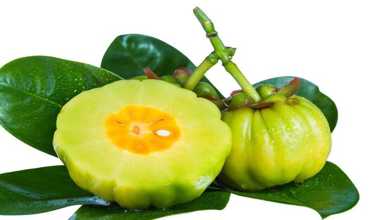 با میوه گارسینیا کامبوجیا آشنا شوید