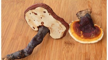 فواید قارچ گانودرما