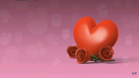 قلب جنین از چند هفتگی تشکیل میشود